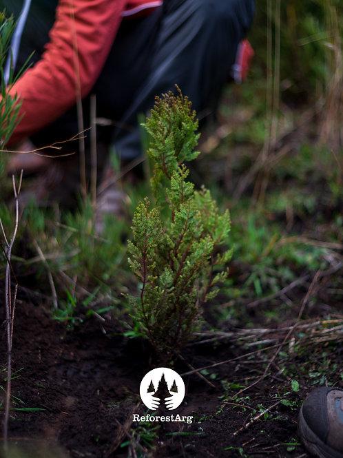 Plantar Patagonia