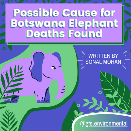 Words Matter: Possible Cause for Botswana Elephant Deaths Found