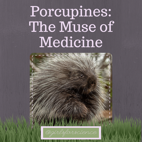 Words Matter: Porcupines - The Muse of Medicine