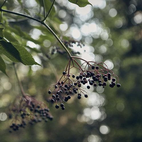 Elderberry Syrup 4oz {Poppy Sol}