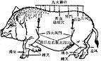 Points d'acupuncture cochon médecine traditionnelle chinoise vétérinaire médecine douce parallèle complémentaires.jpg