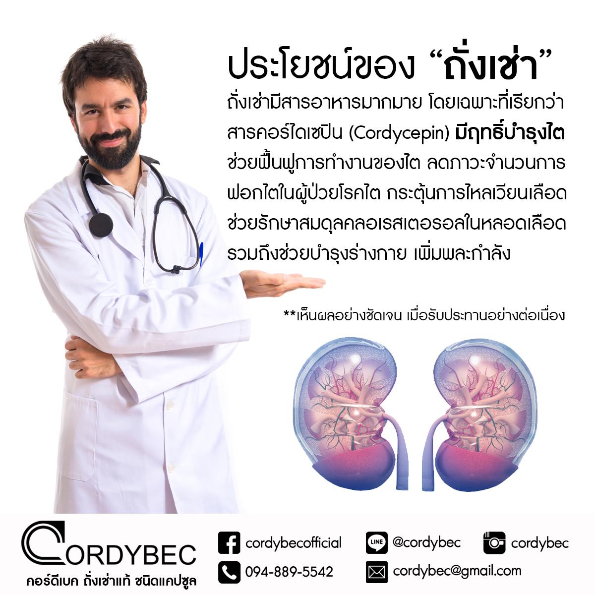 Cordybec kidney 015