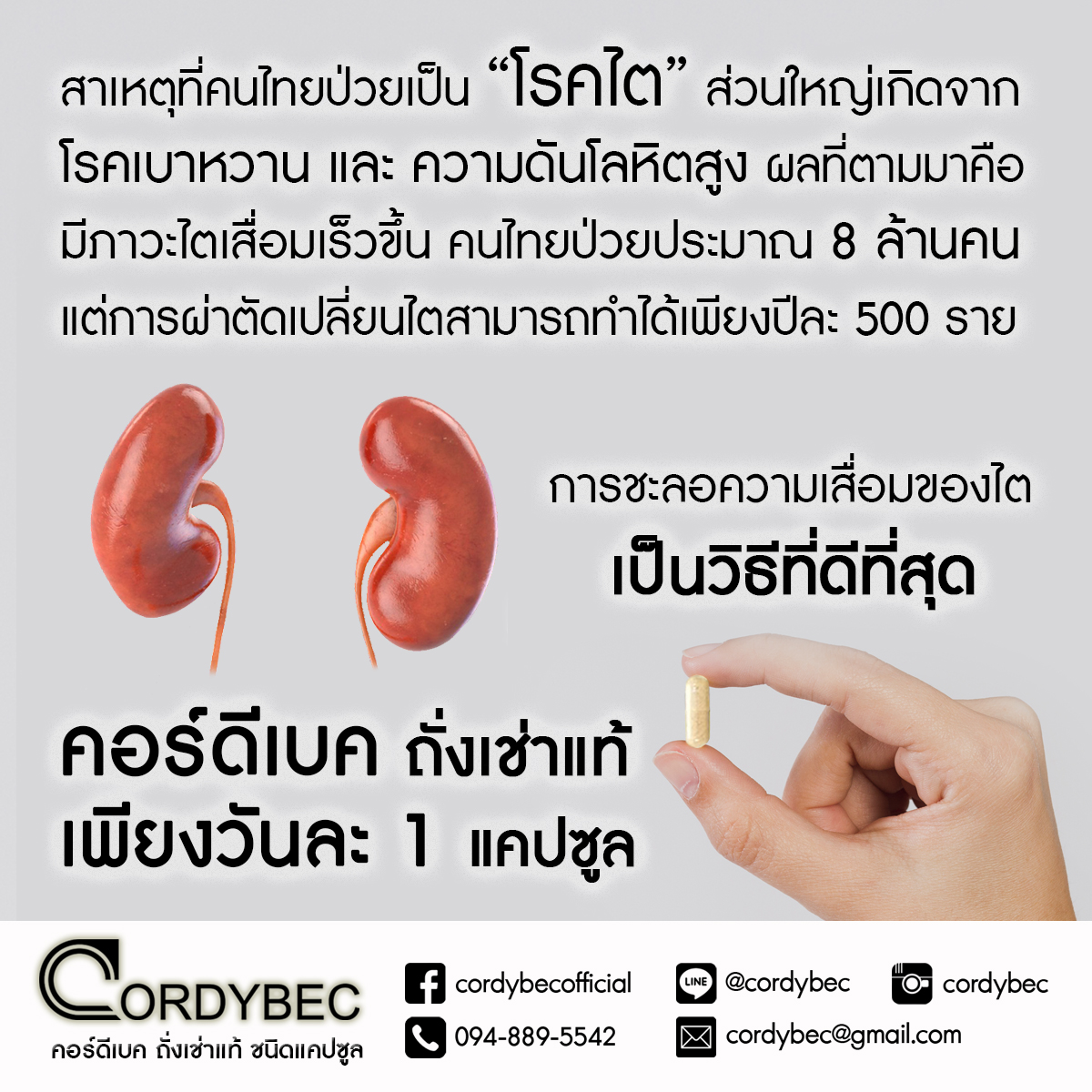 Cordybec kidney 003
