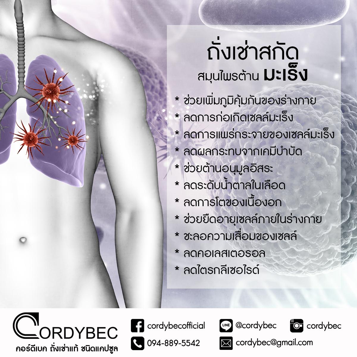 Cordybec มะเร็ง 002