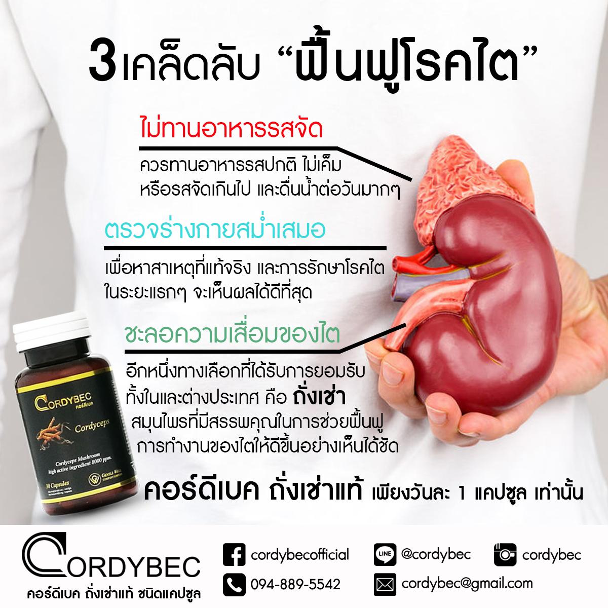 Cordybec kidney 010