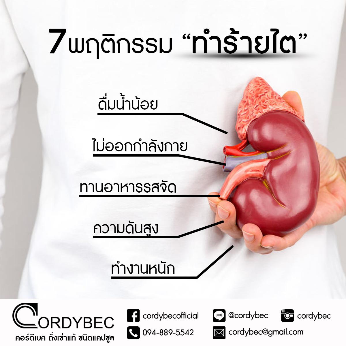 Cordybec kidney 009