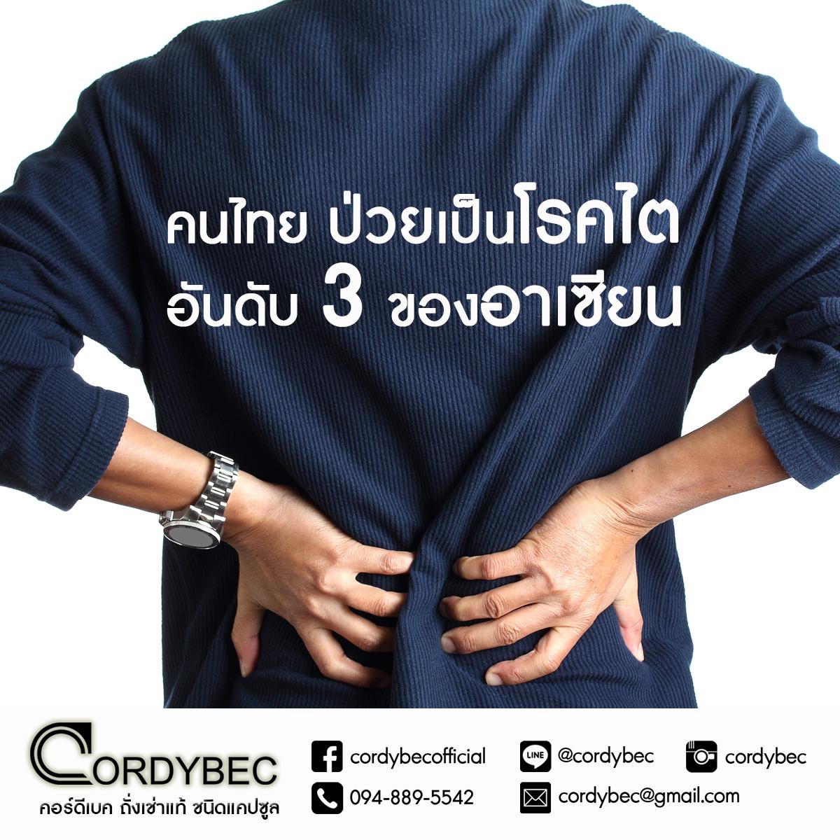 Cordybec kidney 001