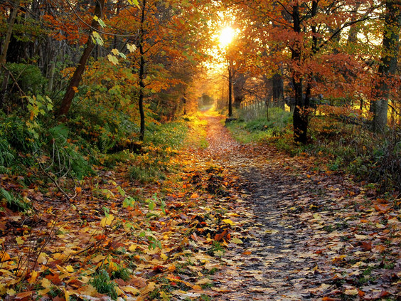 Colorful leaves on a country road in Autumn