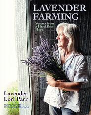 Lavender-Farming-Secrets-from-a-Hard-Row