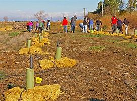 Native-Tree-Planting.jpg