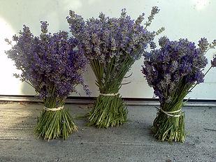 Lori-Parr-Fresh-Lavender-Bouquets-Englis