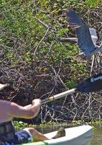 Stone Lakes NWR Wildlife