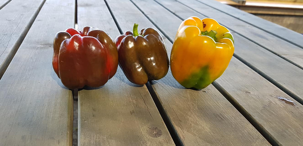 neighbors came by and gave me three bell peppers