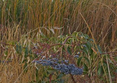 SLNWR Blue Heron Trail
