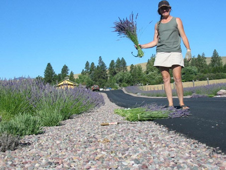 My Book - Lavender Farming: Secrets from a Hard Row Hoed in Western Montana