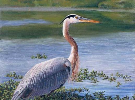 Blue Heron Trail