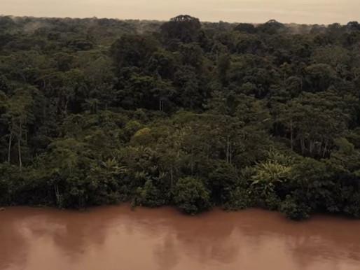 Amazonia? Amazonia!