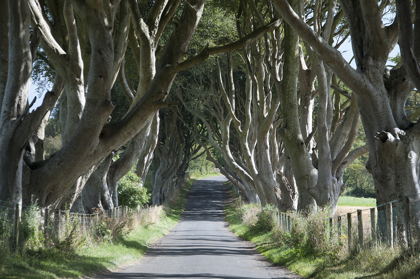 The Dark Hedges, Gracehill, Co Antrim
