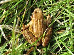 15 Frog