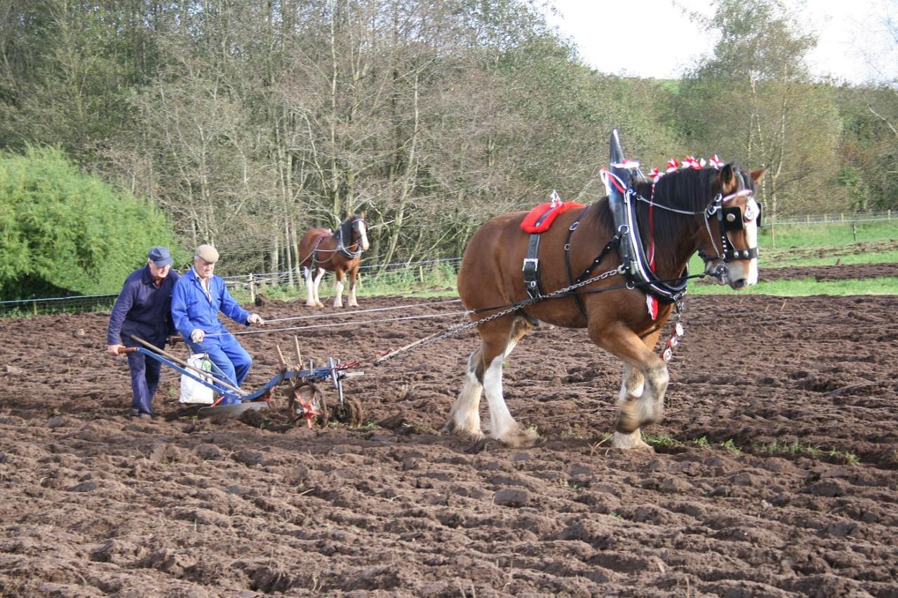 Horse Plough