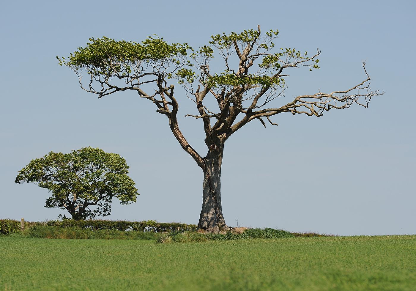 rhianna tree