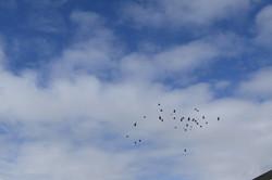 17 Birds in Sky