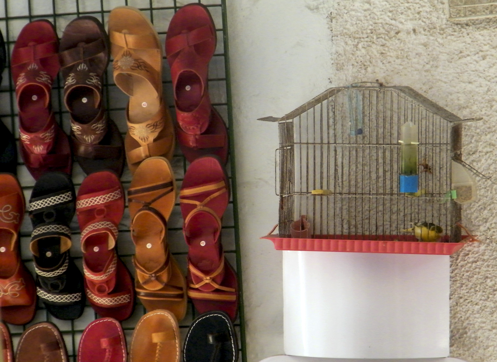 007 Sandals and Birds
