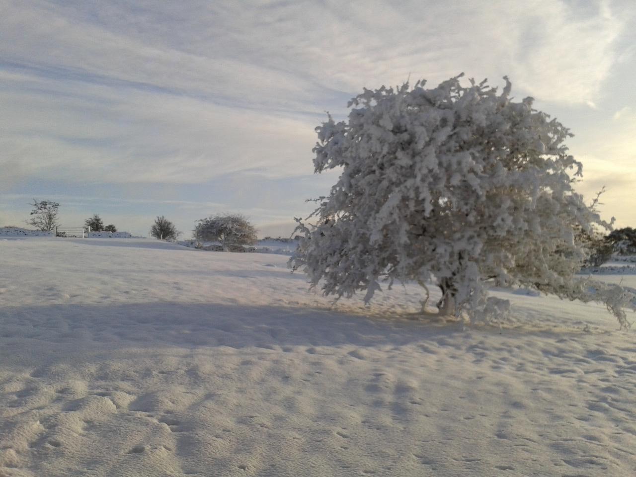 28 Snow Trees