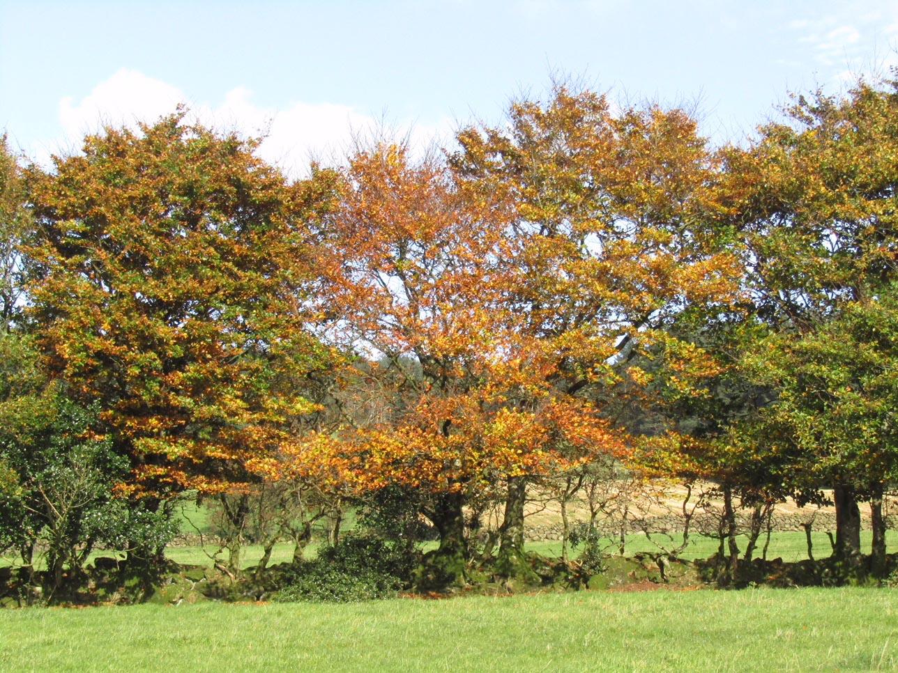 27 Autumn Trees