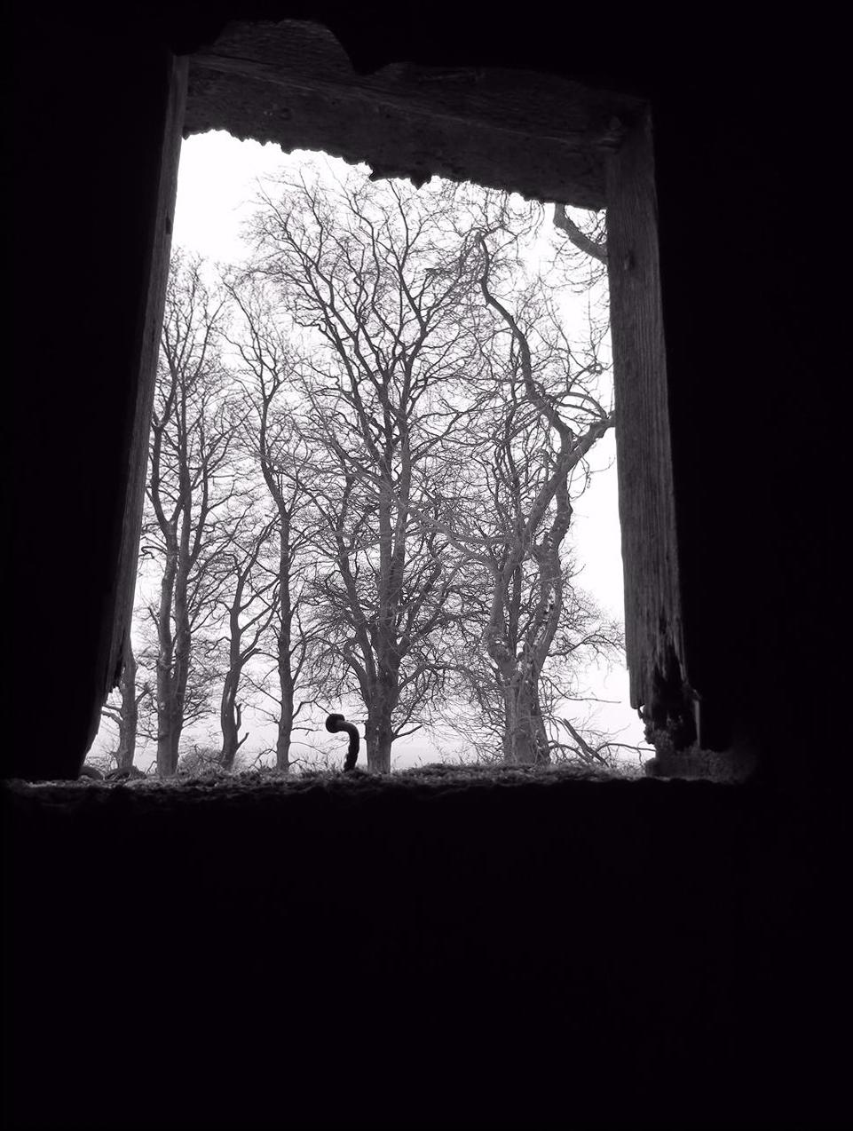25 Tree Window