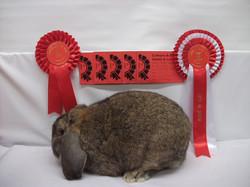 16 Pet Rabbit