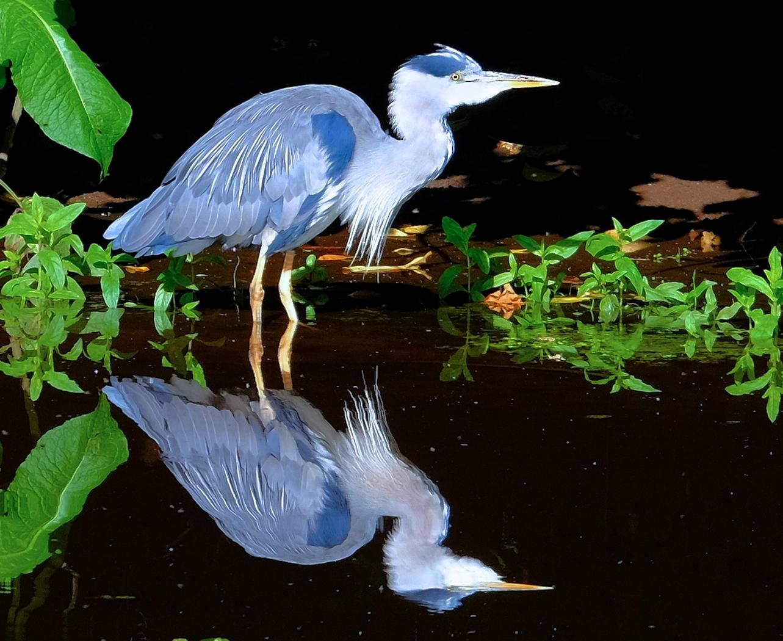 Birds on 6 Mile Water at  Masarene-Jul15