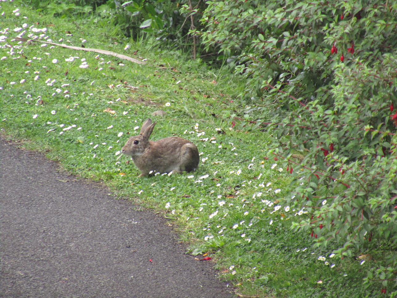 13 Wild Rabbit
