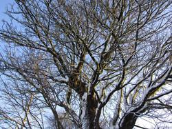 26 Winter Tree