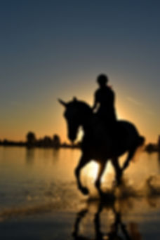 backlit-beach-cavalry-210237.jpg