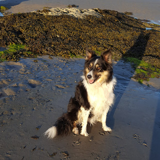 Tilly's always happy at Ballywalter Harbour