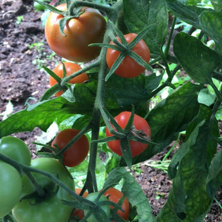 From polytunnel to plate in 50 steps