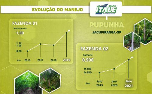 Evolução Manejo Ítale V1 Site