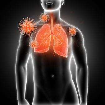 voies respiratoires, poumons