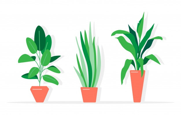 plante, stress