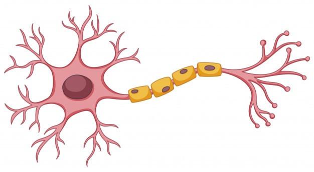 neurone, maladie neurodégénérative