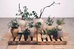 Philosopher Pots