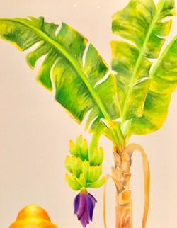 Banana Tree and Me