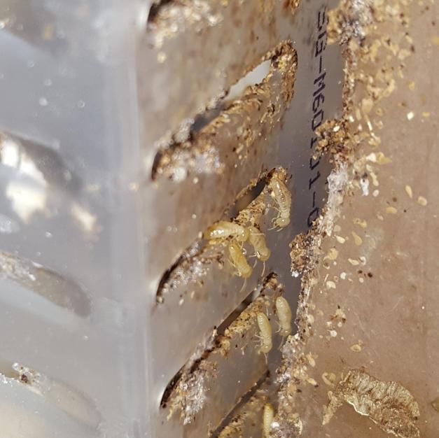 Singapore Termite Control