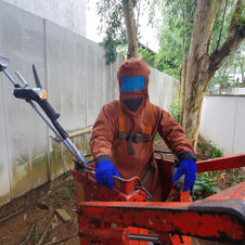 Hornets Hive Removal