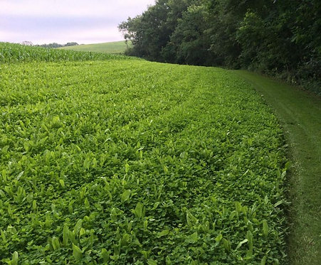 PERENNIAL PLUS CLOVER FOOD PLOT MIX