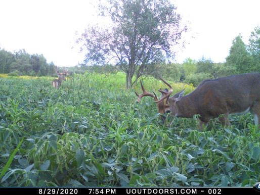 Focused Food Plots - Don Higgins Seminar Takeaways from the Iowa Deer Classic - Article #2