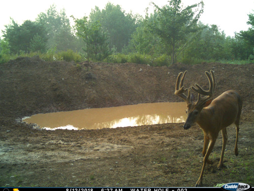 Waterholes, Good or Bad?? - Don Higgins Seminar Takeaways from the Iowa Deer Classic - Article #4