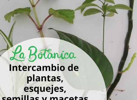 ¡Vuelve nuestro intercambio de plantas!