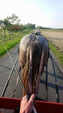 attelage cheval trait gris